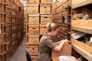 Staff member working in collections